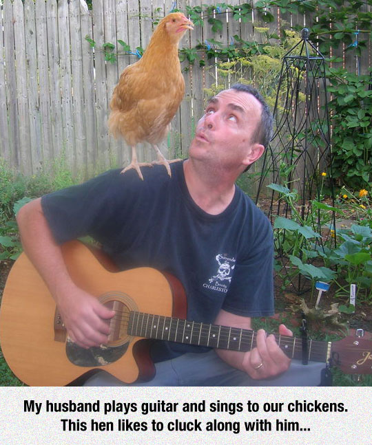 Chickens Have Such Personalities