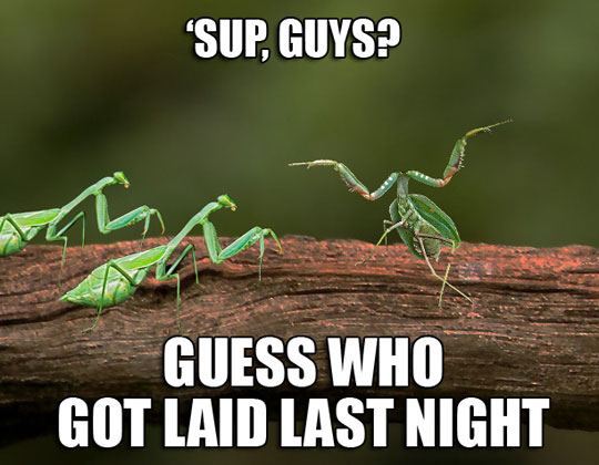 They Did It Mantis-Style