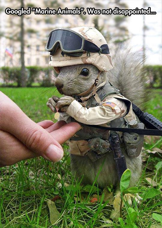funny-marine-animals-squirrel-costume