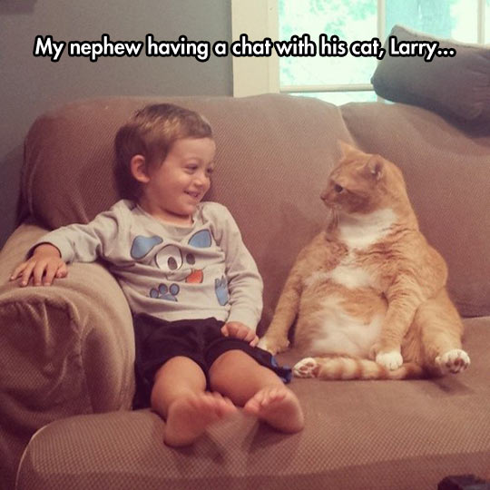 funny-nephew-chat-cat-sitting-couch