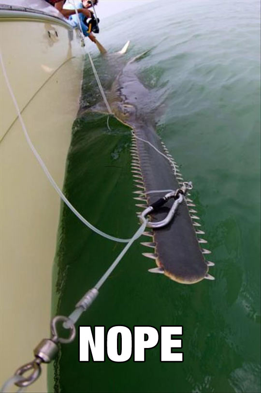 funny-ocean-boat-fishing-shark-teeth