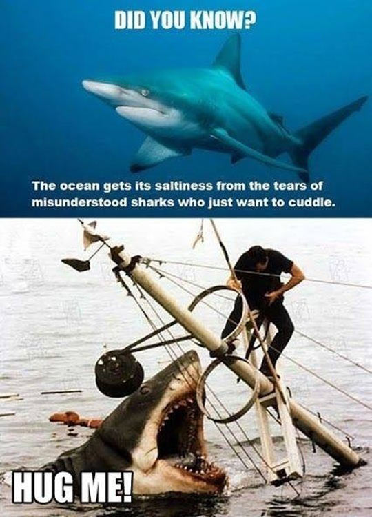 Sad Misunderstood Shark