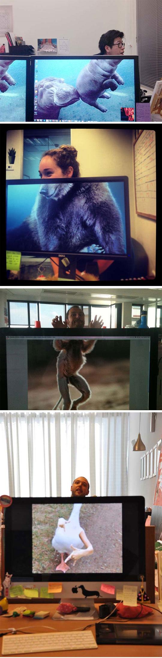 Office Safari Time
