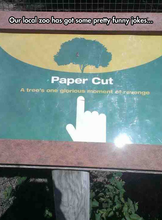 Local Zoo On Paper Cuts