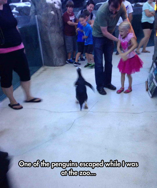 funny-penguins-escaped-zoo-little-girl
