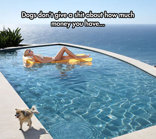 Even The Dog Can Enjoy The Pool