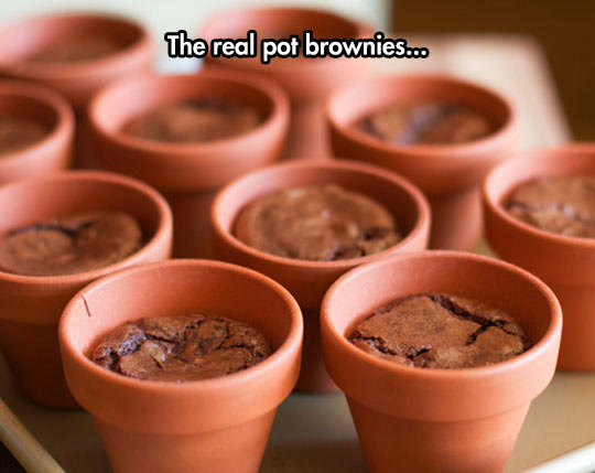I Hope These Are Baked Well