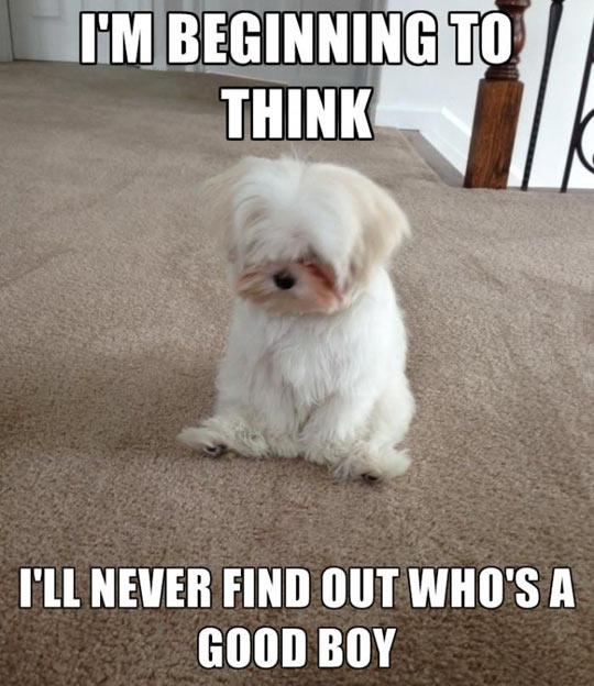 Introducing Melancholy Maltese