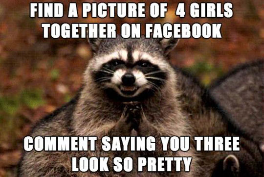 funny-raccoon-Facebook-evil-prank