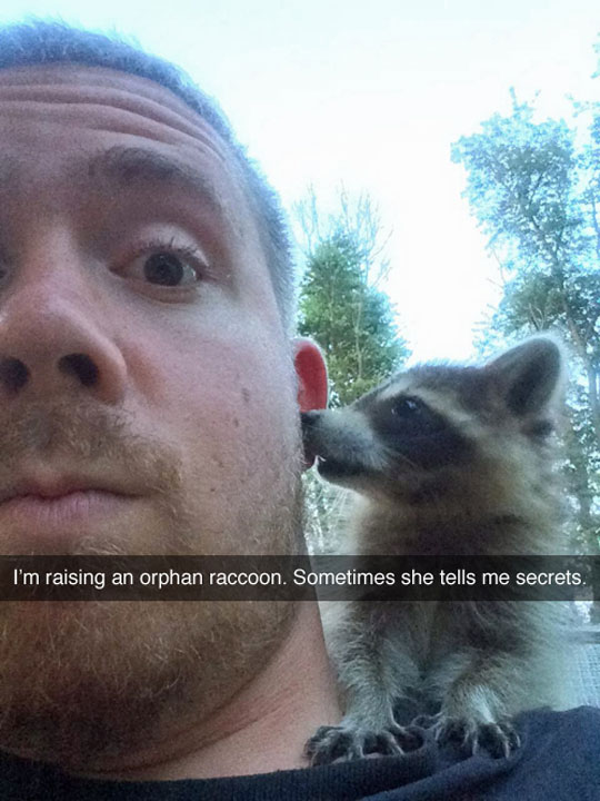 funny-raccoon-secret-ear-forest