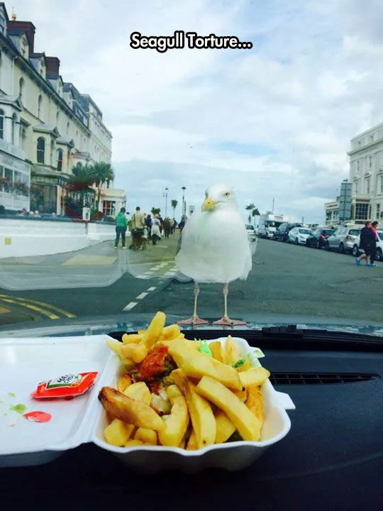 funny-seagull-looking-fries-inside-car