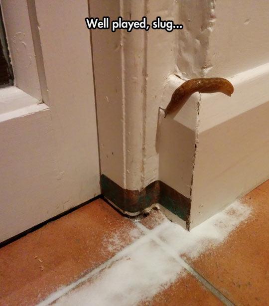Good Move Slug
