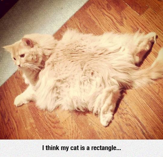 Kitty Looks Like A Little Throw Rug