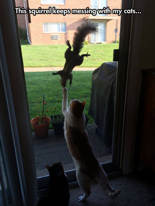 Can The Cats Come Out And Play?