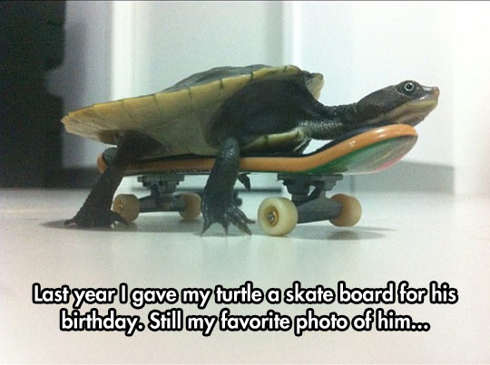 funny-turtle-skater-photo-board