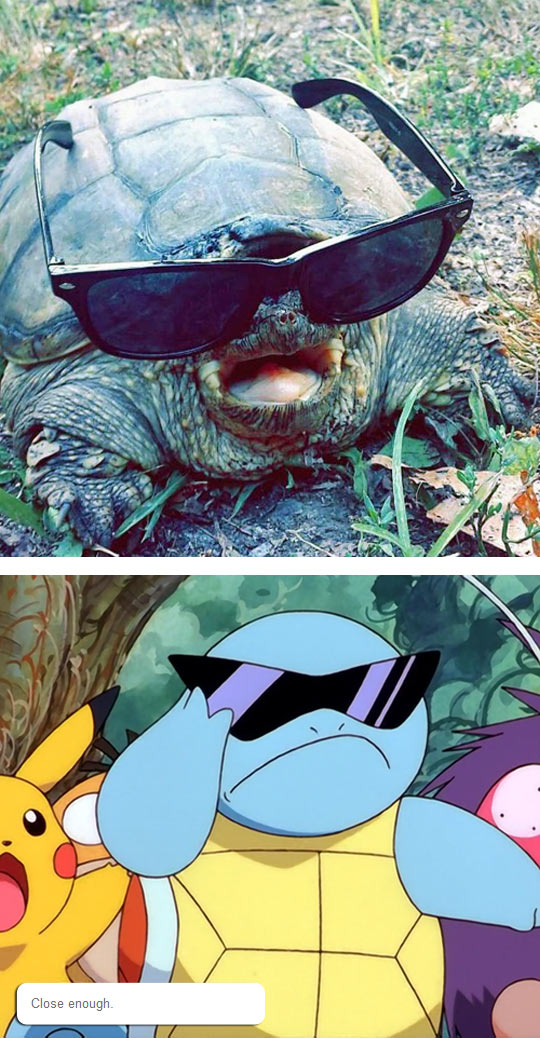 Nice Cosplay, Turtle