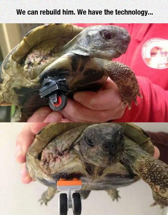 funny-turtle-wheel-handicap-pet