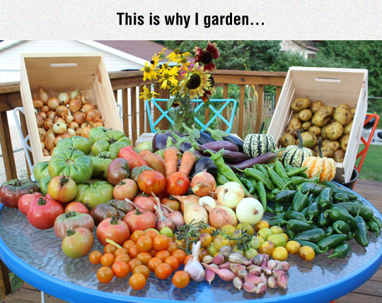 funny-vegetables-fruit-garden-tomatoes-onion