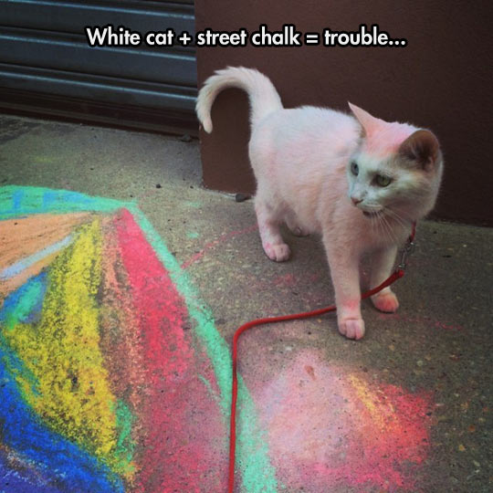 funny-white-cat-street-chalk-color