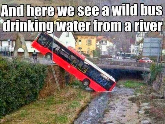 funny-wild-animal-bus-drinking-water