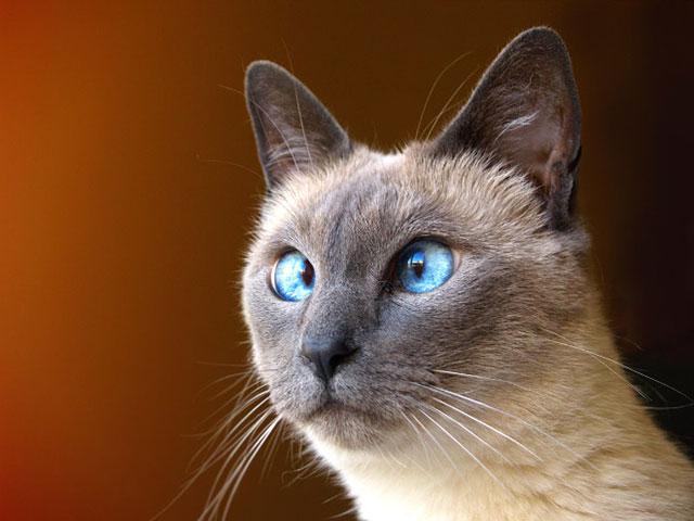 cats_derp_10
