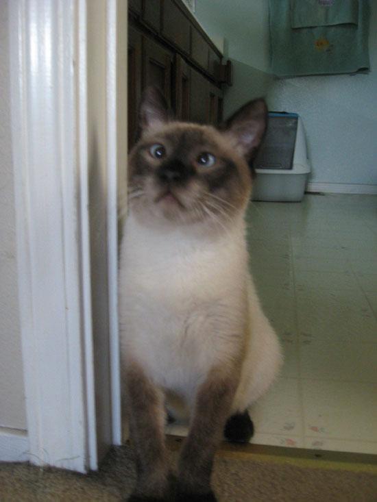 cats_derp_18