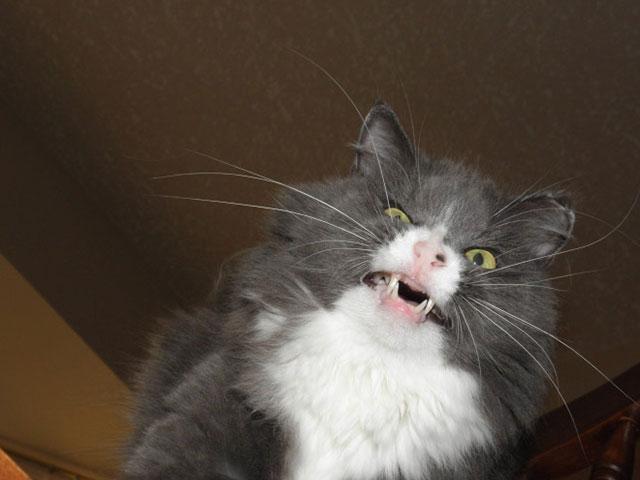 cats_derp_22