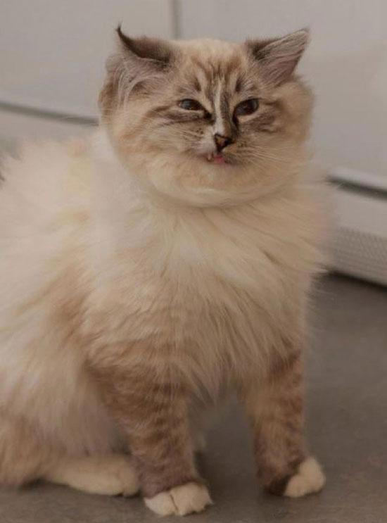 cats_derp_24