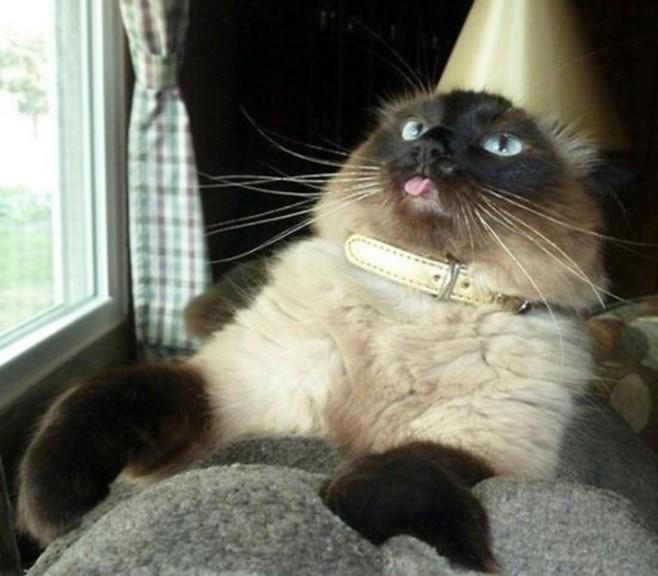 cats_derp_2