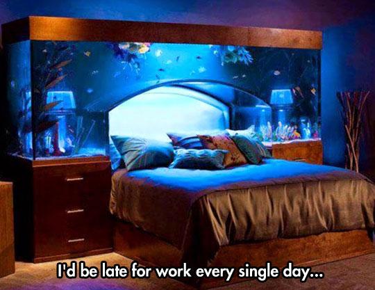 cool-bed-rest-fish-aquarium