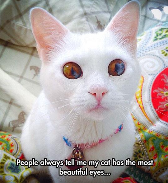 cool-cat-eyes-brown-cute-white