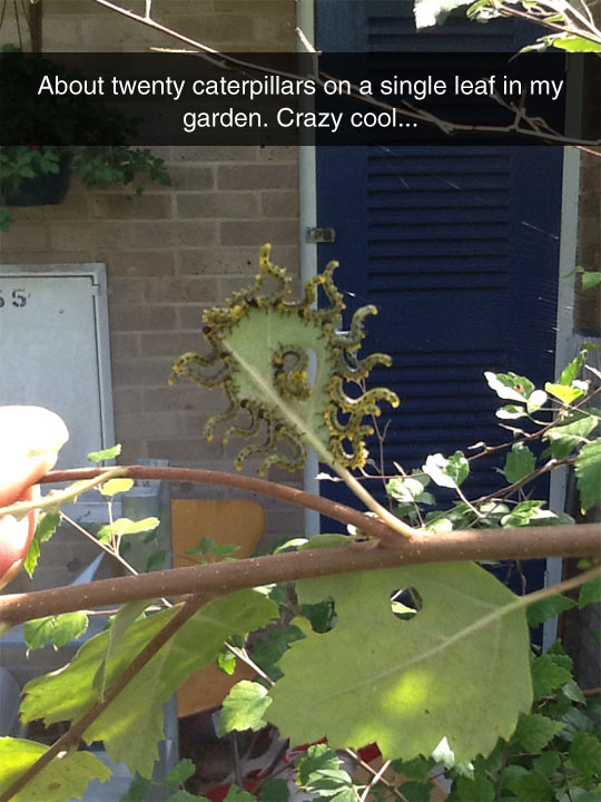 cool-caterpillar-leaf-garden-eating