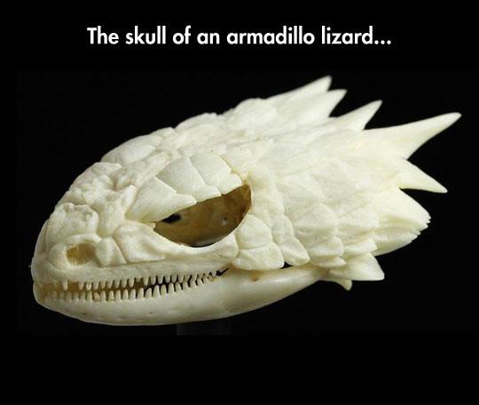 cool-lizard-skull-bones-scary