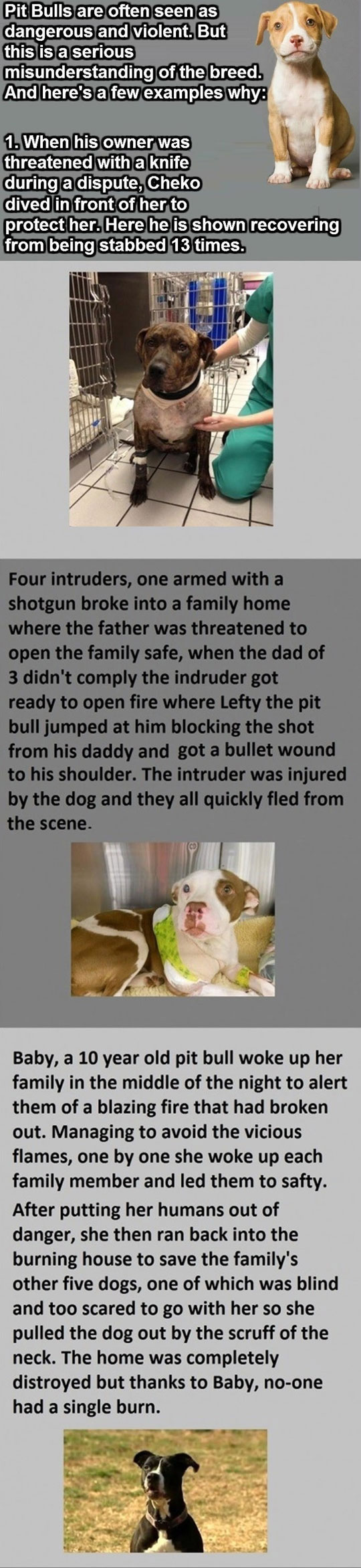 cool-pit-bull-hero-breed