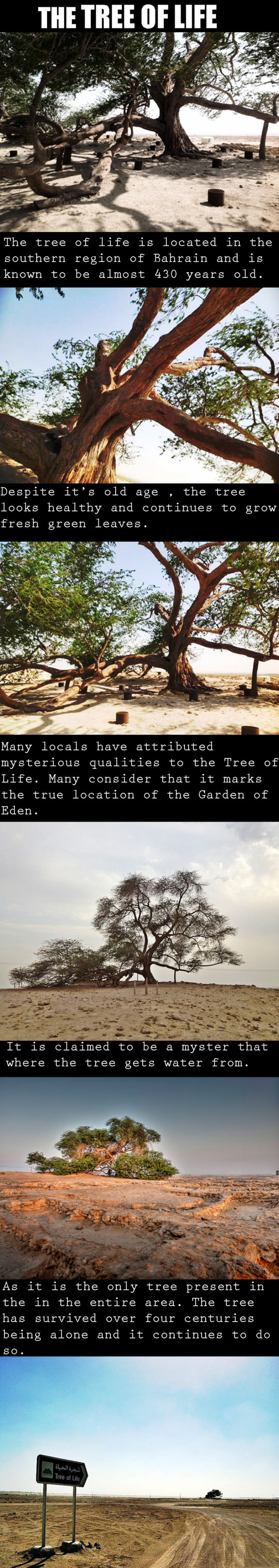 A Miraculous Survival In The Desert width=