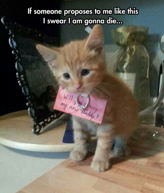 cute-marriage-proposal-kitty-ring