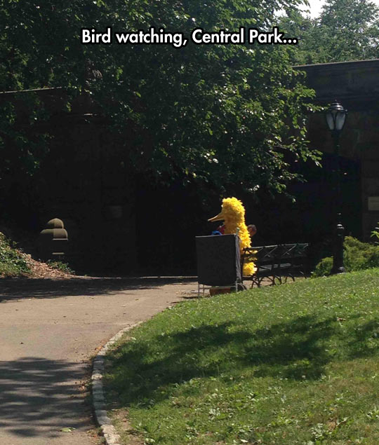 Big Bird Watching