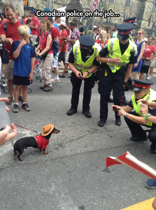 funny-Canadian-Police-job-dog-disguise