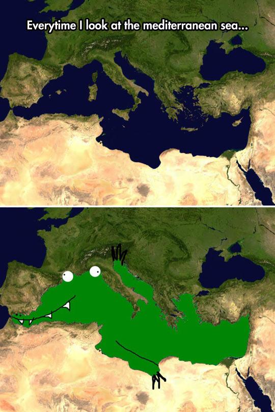 funny-Mediterranean-sea-lizard