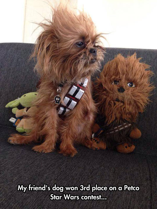 Dog In Chewbacca