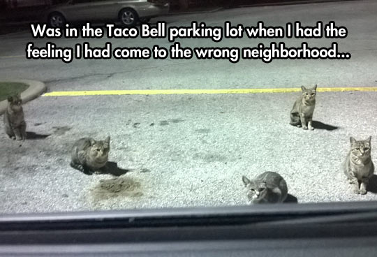 It Was A Nice Neighborhood Before The Cats Came