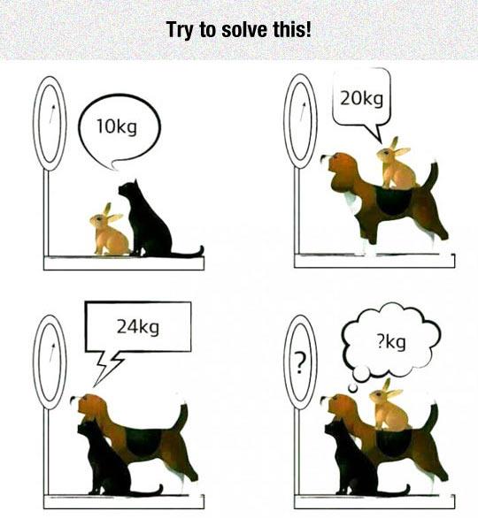 funny-balance-cat-bunny-dog