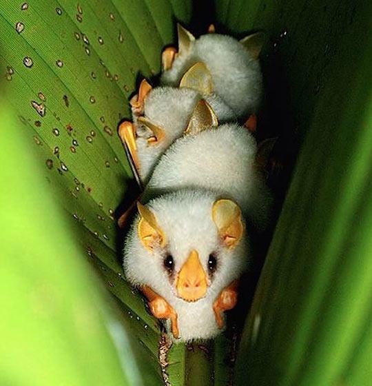 funny-bat-leaf-babies-sleeping