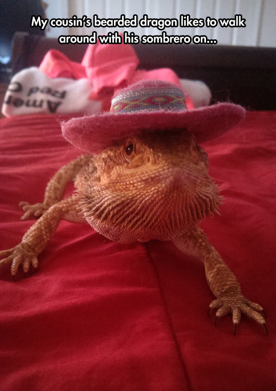 A Fancy Lizard