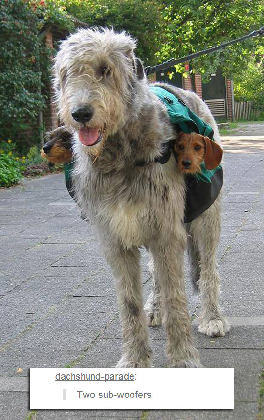 He Comes With Two Subwoofers