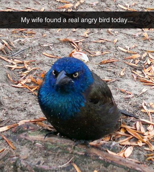 A Real Life Angry Bird