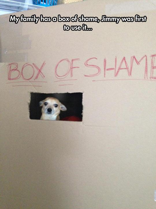 funny-box-shame-dog-family