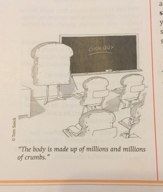 Found In An Actual School Book