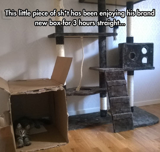 funny-cardboard-box-cat-tower-post
