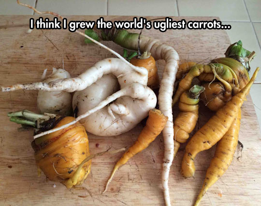 End The Impossible Standards That Grocery Store Carrots Place On Us